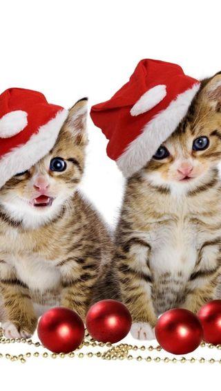 Обои на телефон санта, милые, котята