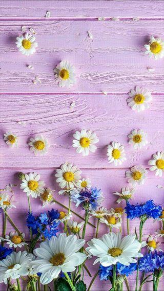 Обои на телефон маргаритка, цветы, розовые, дизайн, дерево