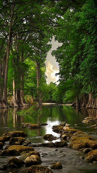 Обои на телефон погода, природа, дерево
