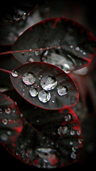 Обои на телефон капли, черные, листья, красые, дождь