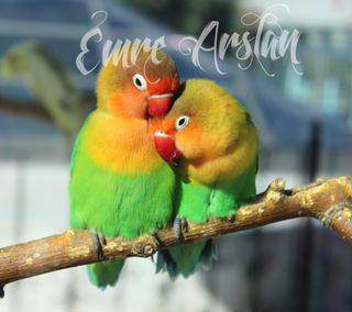 Обои на телефон попугай, рай, птицы, животные, paradise parro
