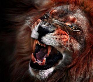 Обои на телефон коты, лев, животные