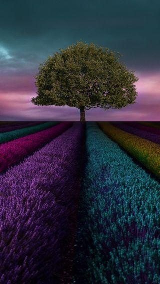 Обои на телефон трава, поле, дерево, lg, g5
