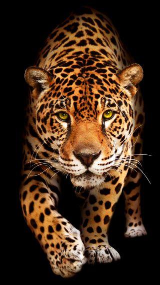 Обои на телефон ягуар, черные, коты, животные, дикие, big