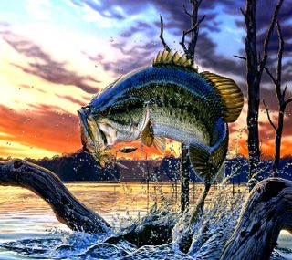 Обои на телефон рыба, ----------