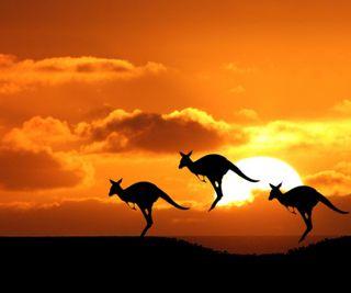 Обои на телефон силуэт, пейзаж, закат, животные, kangaroos, kangaroo