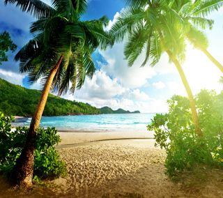Обои на телефон тропические, тропики, пляж, пальмы, море, лето, берег