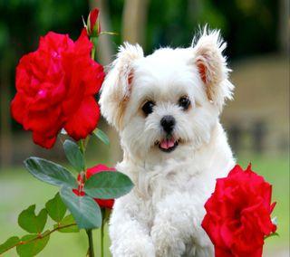 Обои на телефон щенки, собаки, милые, животные