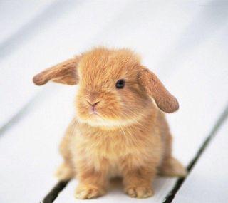 Обои на телефон кролики, милые, малыш, кролик, tan