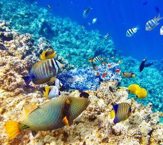 Обои на телефон подводные, рыба, океан, морской, reef, corals