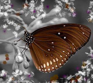 Обои на телефон коричневые, цветные, природа, бабочки