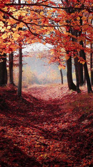 Обои на телефон прогулка, путь, природа, осень, листья, лес