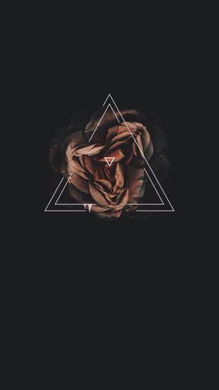 Обои на телефон розы, черные, triangulo