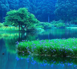 Обои на телефон дерево, природа, пейзаж, зеленые