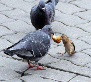 Обои на телефон еда, бой, fight for food, ---------------