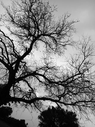 Обои на телефон индия, черные, природа, огонь, небеса, любовь, закат, дизайн, деревья, дерево, love, gujarat, black tree