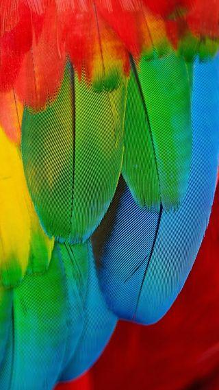 Обои на телефон перья, цветные, птицы, красочные, macaw