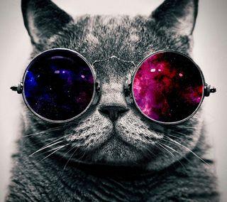 Обои на телефон очки, хипстер, милые, крутые, кошки, галактика, galaxy, cool cat