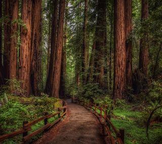 Обои на телефон путь, лес, дерево
