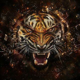Обои на телефон тигр, кошки, животные, абстрактные