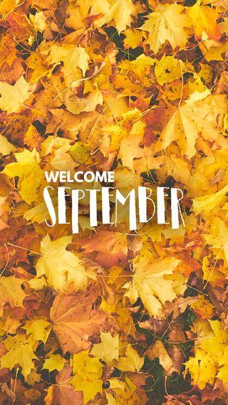 Обои на телефон фотографии, сцены, сентябрь, природа, осень, листья, fall nature, doctorgraphics, autumn pictures