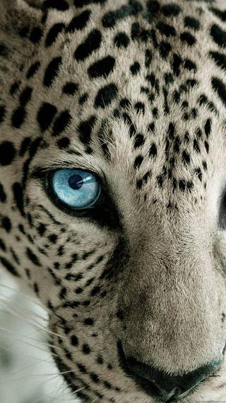 Обои на телефон леопард, экран, снег, блокировка, белые, snow leopard