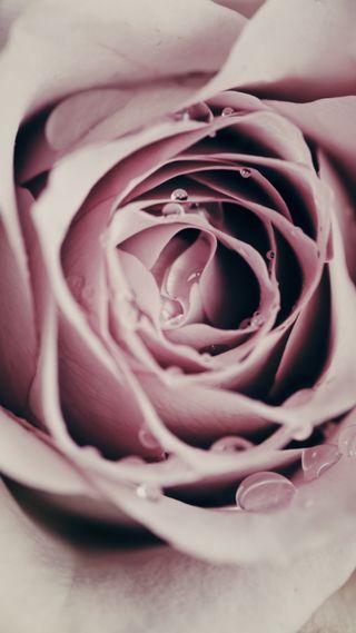 Обои на телефон валентинки, цветы, розы, любовь, капли, дождь, валентинка, love