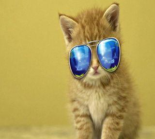 Обои на телефон кошки, cat------------, ------------
