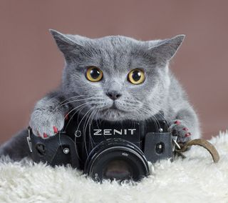 Обои на телефон питомцы, котята, животные, annnnnnnnnnnnnnnnnnls