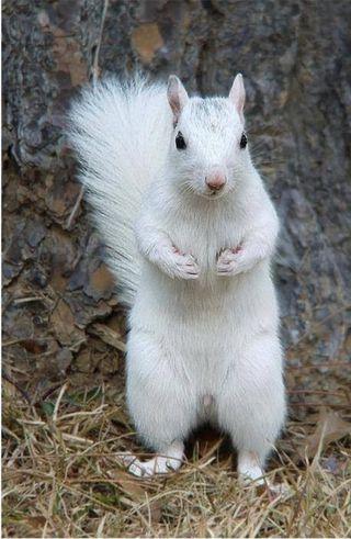 Обои на телефон поцелуй, белые, белка, white squirrel