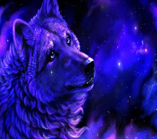 Обои на телефон прекрасные, волк, beautiful  wolf