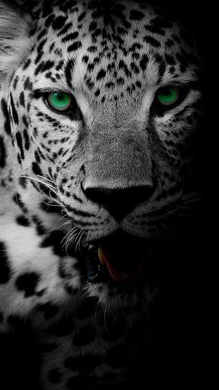 Обои на телефон дикие, черные, лицо, леопард, зеленые, животные, глаза, белые