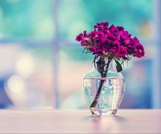 Обои на телефон фиолетовые, цветы, стекло, ваза