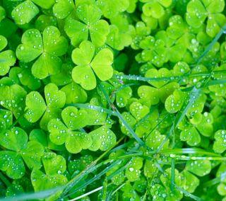 Обои на телефон st paddys, clovers, ирландские, ирландия, кельтский