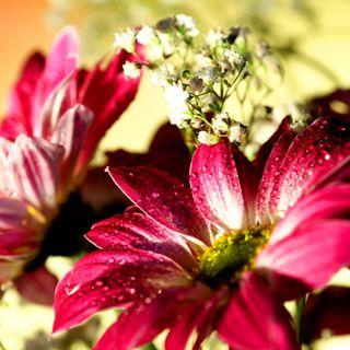 Обои на телефон цветы, xq, hf