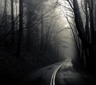Обои на телефон лес, темные, dark forst