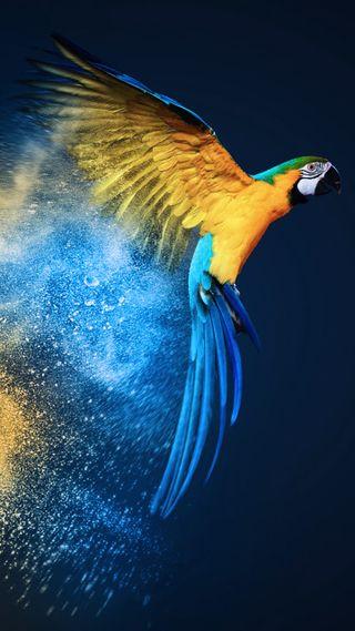 Обои на телефон попугай, синие, птицы, macaw