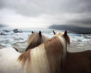 Обои на телефон лошади, снег, лед, животные