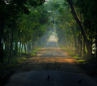 Обои на телефон природа, прекрасные, бангладеш, ontordrishti, carzon, bengal