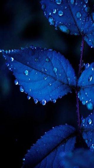 Обои на телефон листья, синие, fsdf, blue leaf