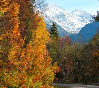 Обои на телефон румыния, осень, листья, горы, trasfagarasan