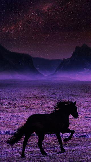 Обои на телефон лошадь, захватывающие
