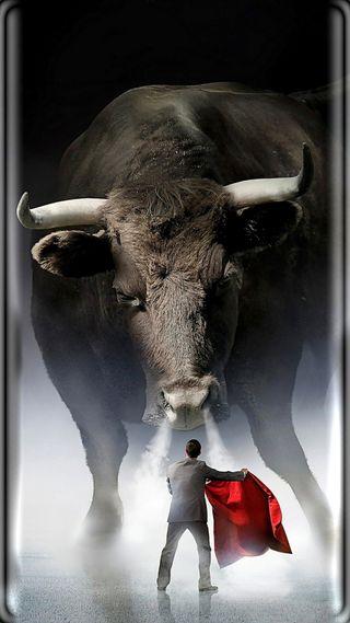 Обои на телефон испания, фон, ферма, крутые, красые, быки, бык, toreador, bullfighter