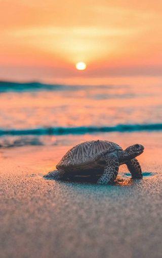 Обои на телефон черепаха, море