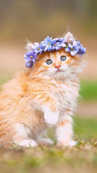 Обои на телефон поцелуй, милые, крутые, кошки, котята, коты
