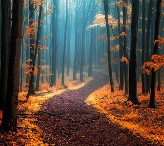 Обои на телефон путь, осень, лес