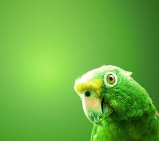 Обои на телефон попугай, прекрасные, зеленые, жизнь, животные, естественные, hd