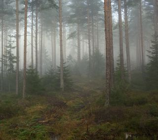 Обои на телефон джунгли, туман, лес