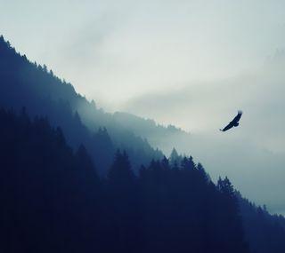 Обои на телефон холмы, туман, птицы, природа, пейзаж, облака, естественные, деревья, uhd, 4k