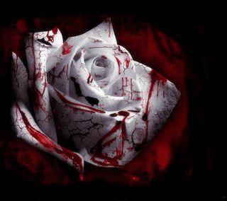 Обои на телефон кровь, розы, rose blood, gejk, dhf